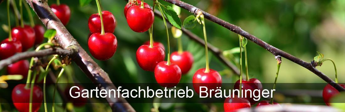 Gartenbau für Remchingen - Pflanzenvielfalt Bräuninger: Landschaftsbau, Baumschule
