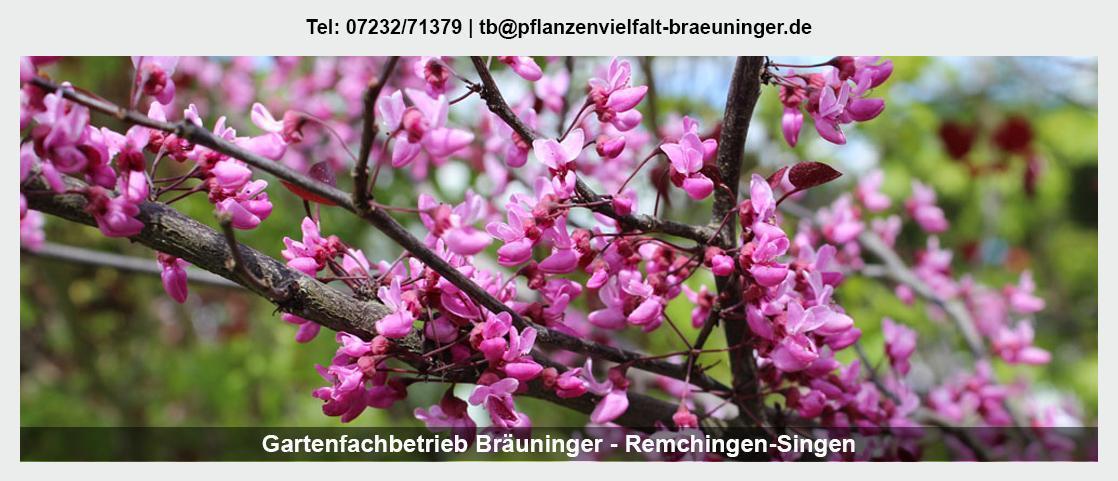 Pflanzenwelt Königsbach-Stein - Gartenfachbetrieb Bräuninger: Floristik, Rollrasen legen, Valentinstag,
