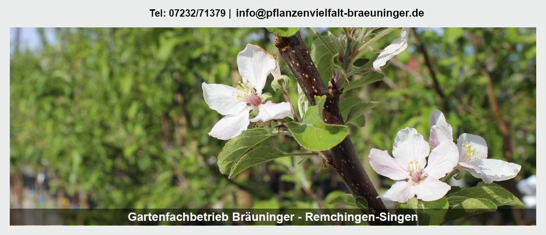 Pflanzenwelt Pfinztal - Gartenfachbetrieb Bräuninger: Hecken schneiden, Heckenpflanzen, Obstbäume,