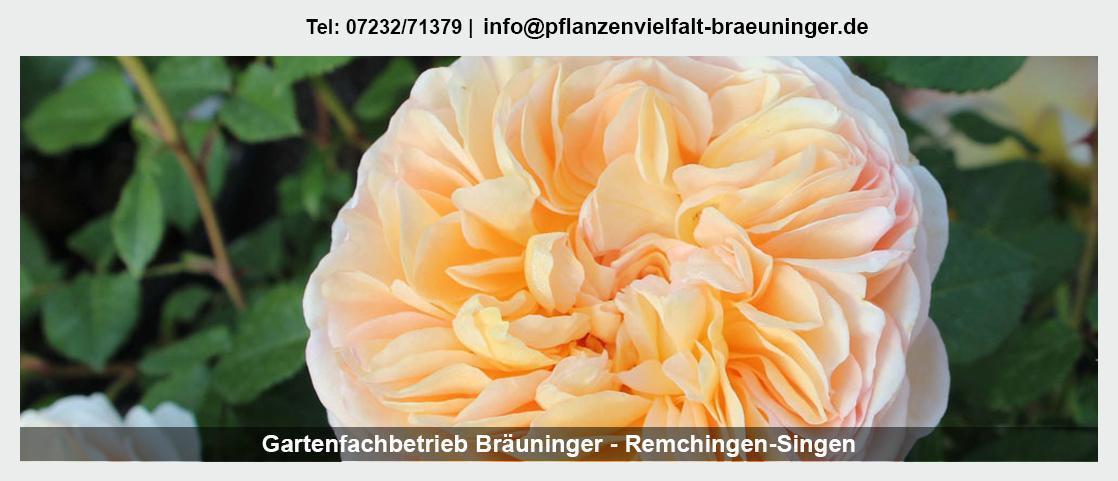 Gärtnerei für Keltern - Gartenfachbetrieb Bräuninger: Floristik, Muttertag, Hecken schneiden,