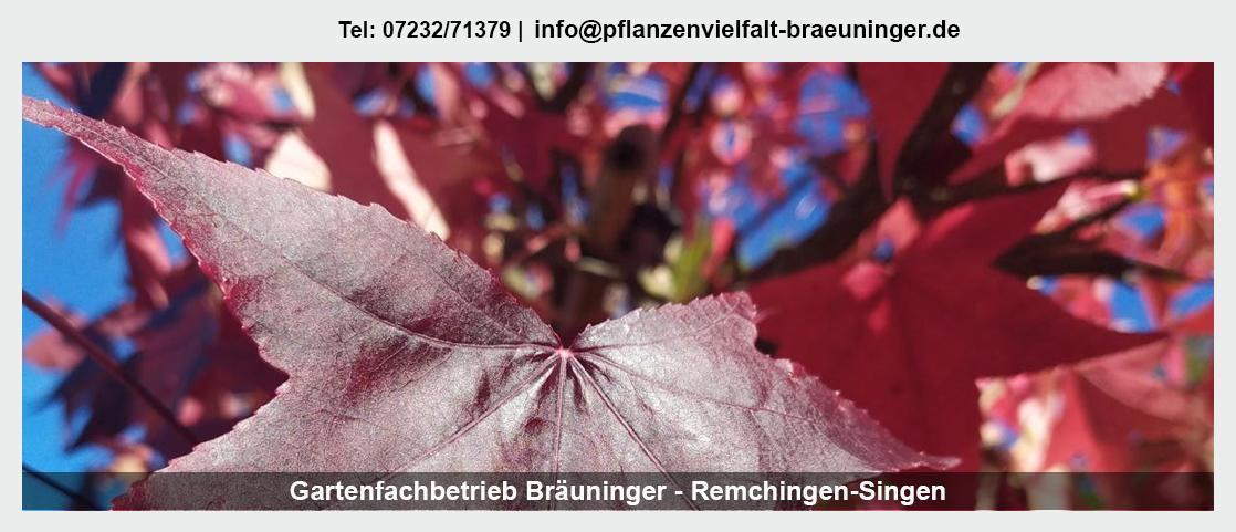 Pflanzenwelt Remchingen - Gartenfachbetrieb Bräuninger: Gartendekoration, Rosen, Muttertag,