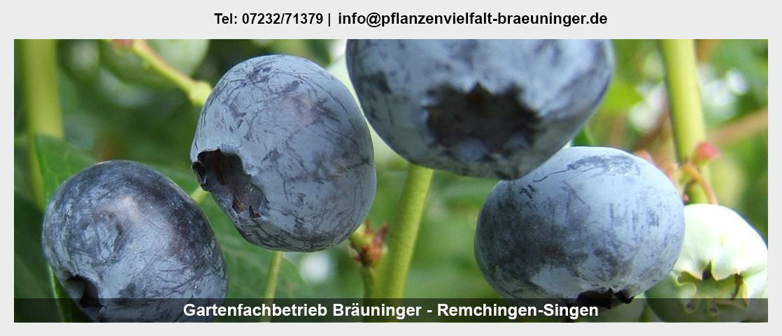 Pflanzenwelt Waldbronn - Gartenfachbetrieb Bräuninger: Valentinstag, Gartendekoration, Rollrasen legen,