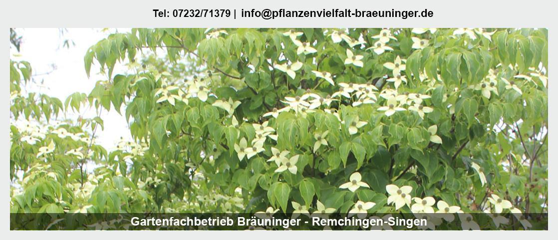 Pflanzenwelt Königsbach-Stein - Gartenfachbetrieb Bräuninger: Obstbäume, Floristik, Rosen,